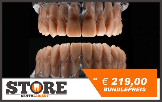 BUNDLE! - OK & UK-Modelle mit Wurzelzähnen in einem Sockel aus klarem Acryl