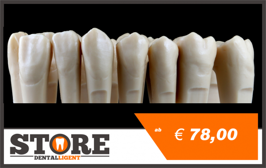 OK teeth in a set of 14 pcs. for DEMO-MODEL S1