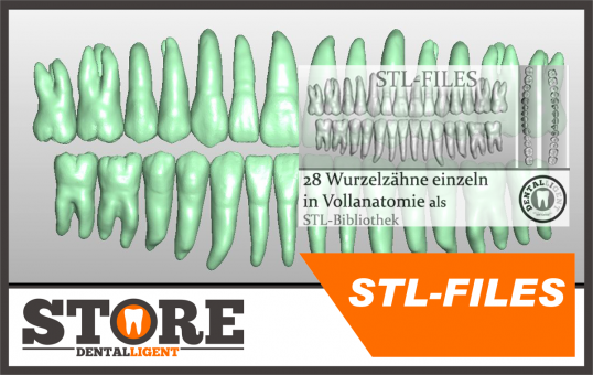 STL-FILES - 28 root teeth individually in full anatomy as STL library