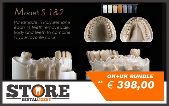 6a3101f17cf981 Dentalligent.store | DEMO Modell S-3 OK + UK BUNDLE - each 14 teeth ...